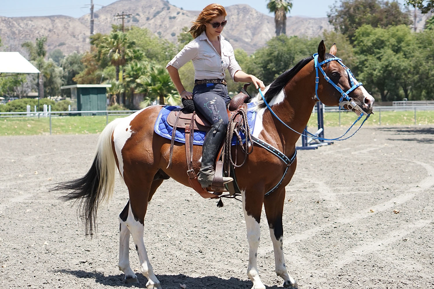 Horses for sale moonshine equestrian for 11127 orcas ave lakeview terrace ca 91342